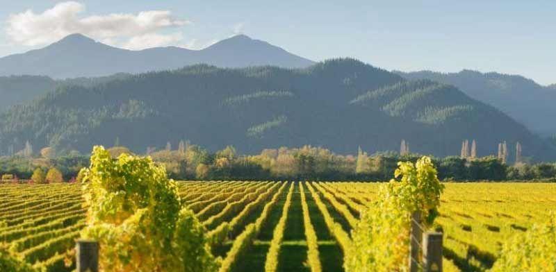 Vinexus Sauvignon Blanc Day Headergrafik